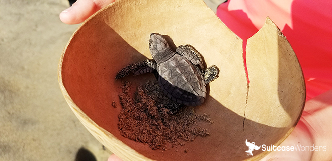 vivo resorts turtle release puerto escondido